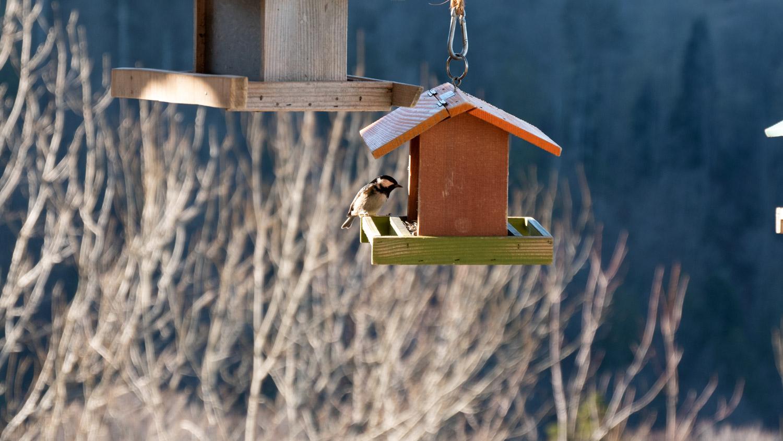 Karmnik dla ptaków – jak zrobić i jak zabezpieczyć?