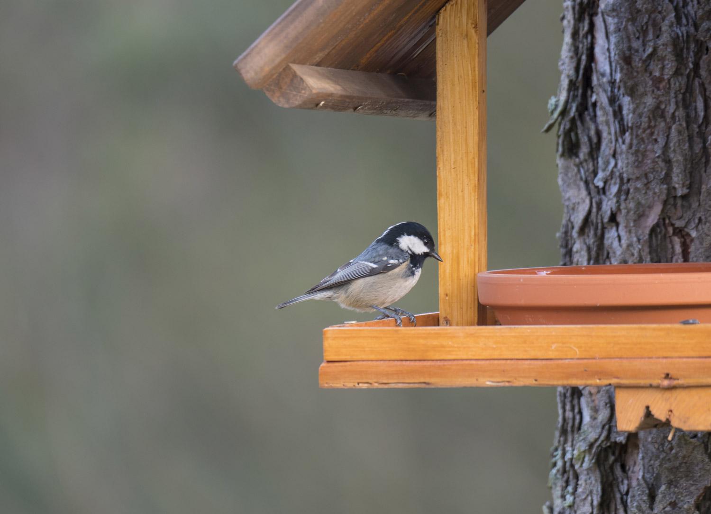 Robimy karmnik dla ptaków DIY!
