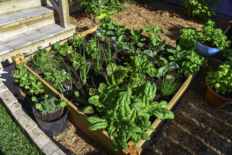 Jak zrobić skrzynie na warzywa i po co ją impregnować?